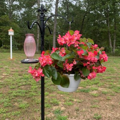 15 Tips To Attract Hummingbirds