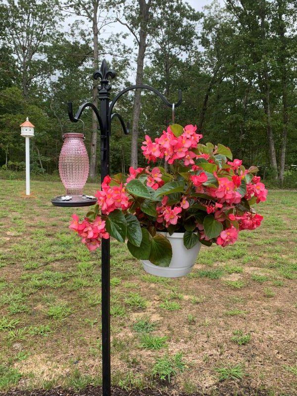 15 Tips To Attract Hummingbirds 1.jpeg