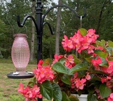 15 Tips To Attract Hummingbirds 6.jpeg