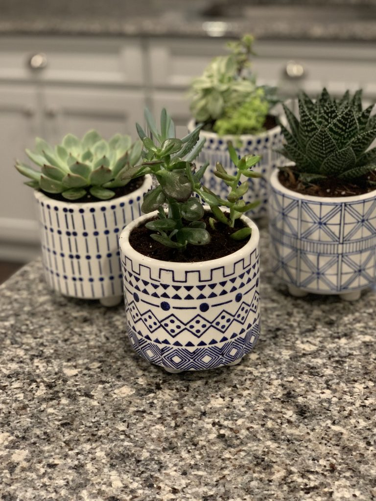 Succulents for Indoors 13.jpeg