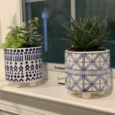 Succulent Plants for Indoors