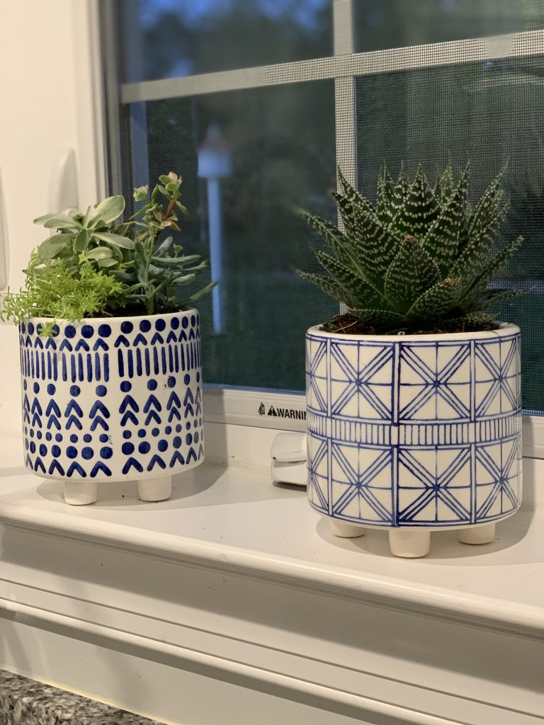 Succulents for Indoors 19.jpeg