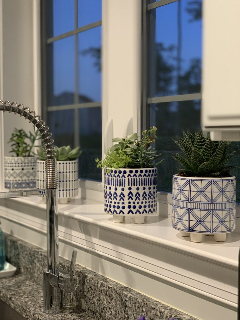 Succulents for Indoors 20.jpeg