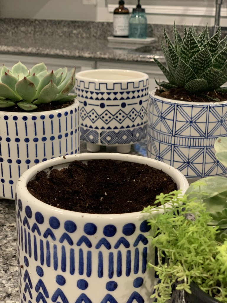Succulents for Indoors 9.jpeg