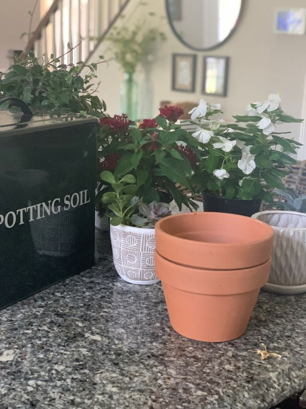 Pots and plants.jpeg