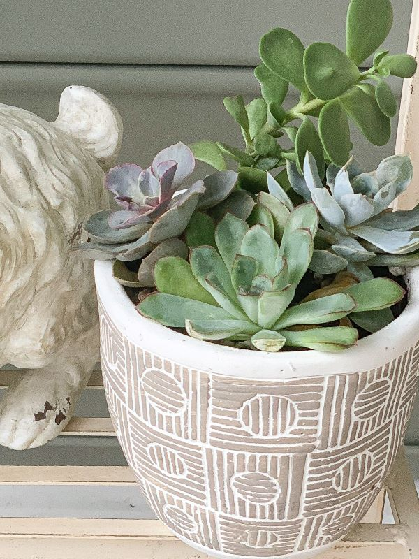 Succulents for a plant stand.jpeg